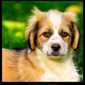 Puppy Obelix