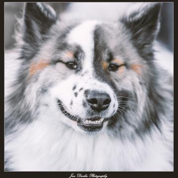 Hundegruppe Thören